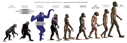 Alt Chart Depicting our bipedal Hominoid-Hominid cousins in our phylogenic advance to strident bipedalism - From Proconsul (15 Mya) to H. erectus (1.8 Mya)