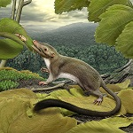 Placental Ancestor Reconstruction by Paleo Artist Carl Buell